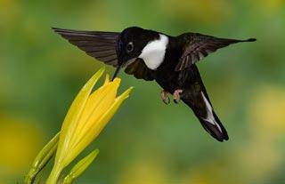 Hummingbird-Photography-Workshop