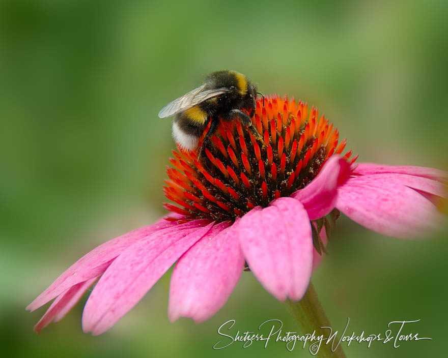 A Bees Workday on a Red and Pink Flower