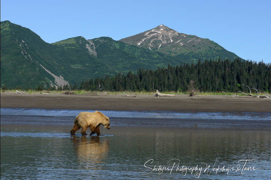 Lone Bear with Mountains