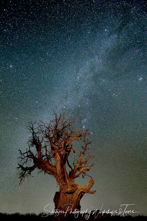 Milky way and juniper tree by night