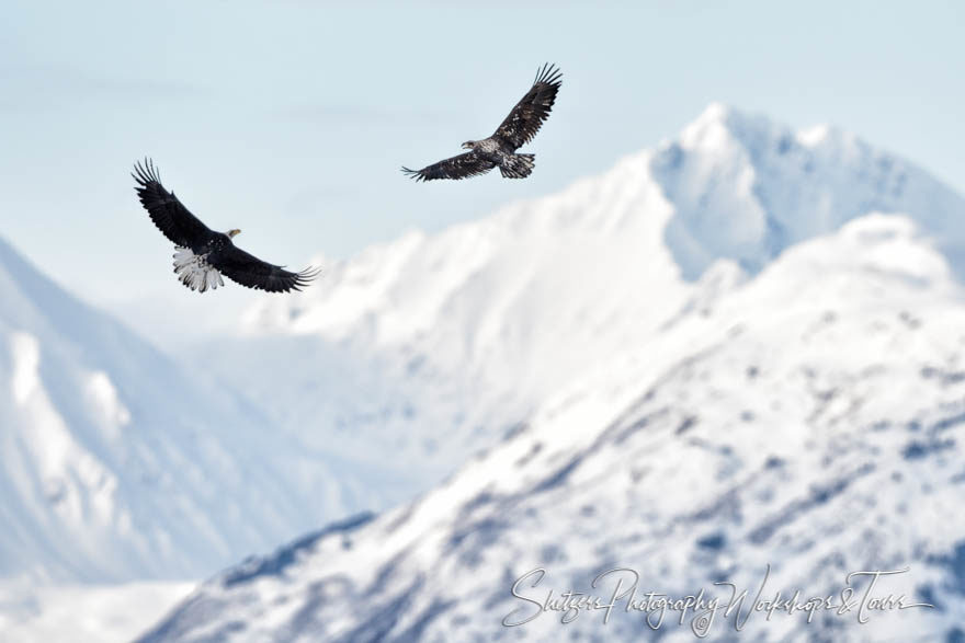 Young Eagles Soar over Mountains