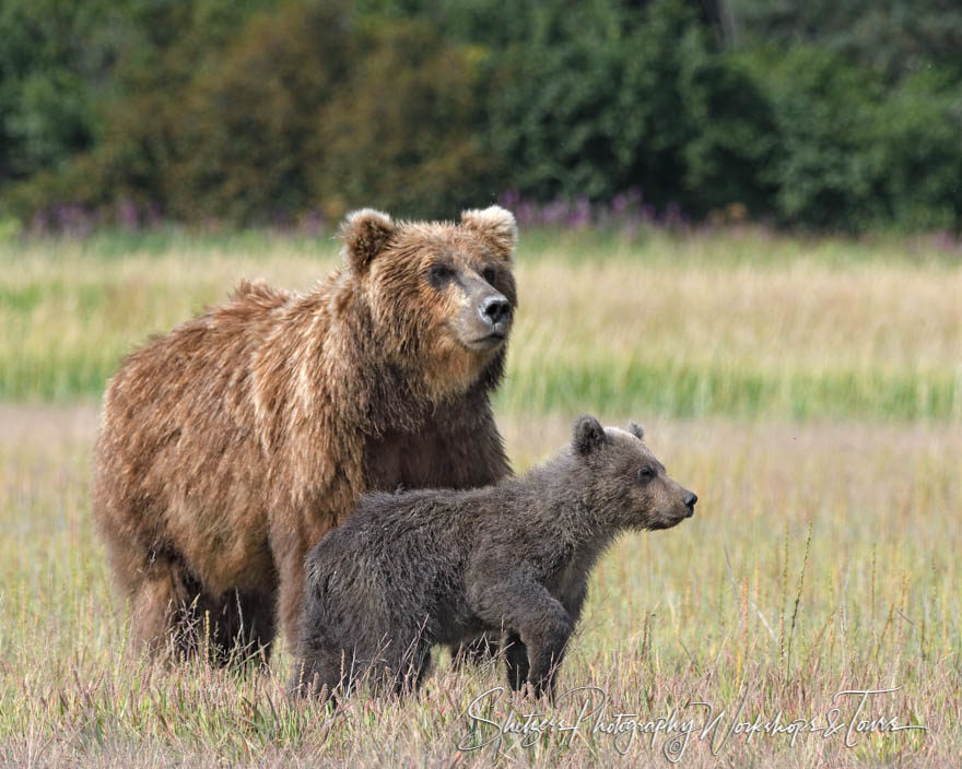 This Bear Family Sees Together
