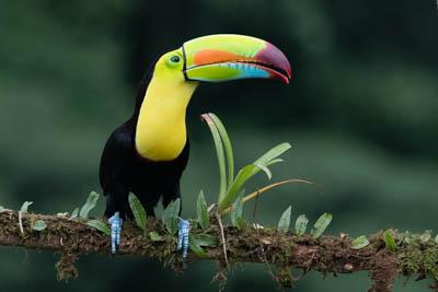 Costa Rica Photo Workshop