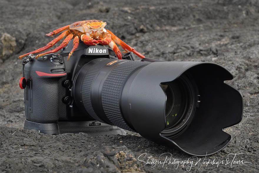 Sally Lightfoot Crab Shell and Camera