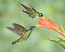 Hummingbird Photo Workshops